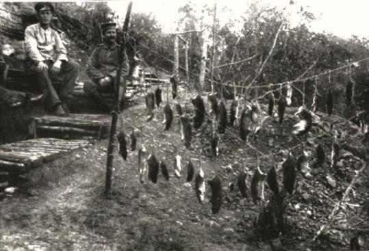 La vita in trincea. Caccia dei ratti per sopravvivere. Prima Guerra Mondiale. 1915