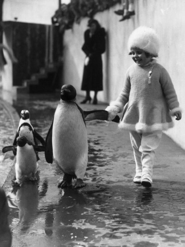 Una bambina tiene la mano a un pinguino mentre camminano insieme nello zoo di Londra 1937