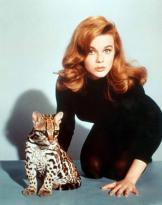 Ann Margaret e un gattopardo americano, circa 1960