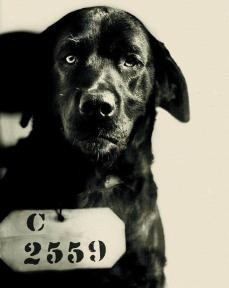 Pep, il cane che è stato condannato all'ergastolo per aver ucciso il gatto del governatore della Pennsylvania. 1924