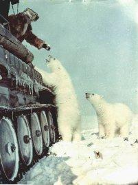 Un trasportatore artico Sovietico alimenta gli orsi polari con latte in scatola, 1950