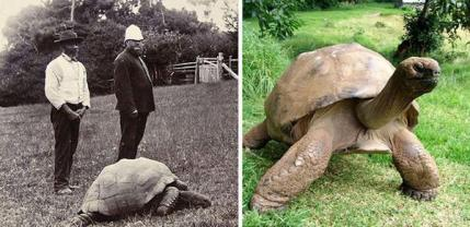 Jonathan La tartaruga fotografata nel 1902 e oggi