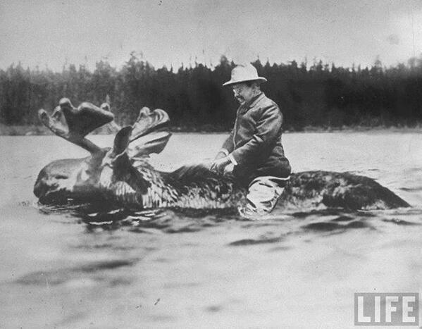 Roosevelt attraversa il fiume in groppa a un alce gigante