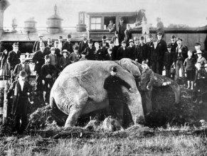 Una folla si raduna dopo che l'elefante Jumbo viene colpito e ucciso da un treno in Ontario, 1885