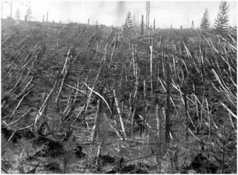 L'impatto del meteorite di Tunguska, 1908