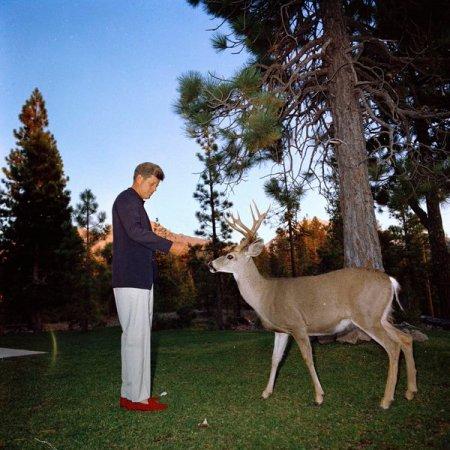 Il presidente John F. Kennedy alimenta un cervo nel Parco Nazionale Lassen Volcanic, CA 1963