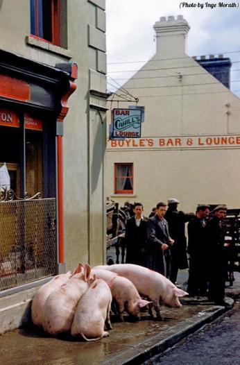 Il Puck Fair a Killorglin, Contea di Kerry, Irlanda, circa 1954
