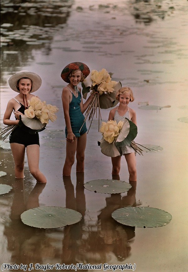 Ragazze in acqua con mazzi di fiori di loto americano, Amana, Iowa 1938