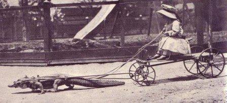 Bambina su un carretto trainato da un alligatore