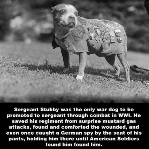 Sergente Stubby, un cane di guerra