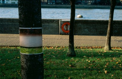 Signs and Wonders by Alva Bernadine