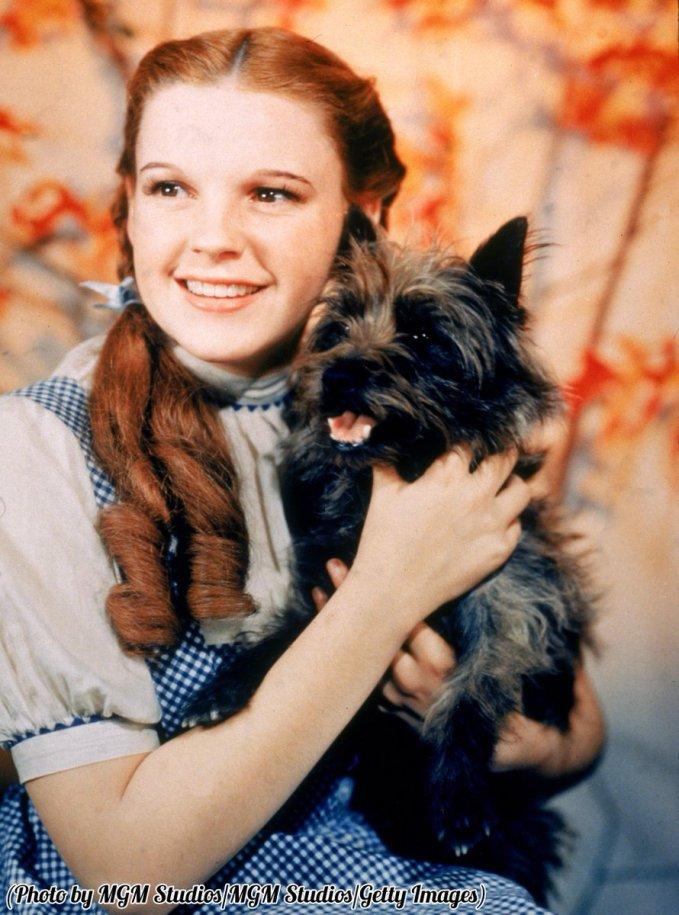 Judy Garland a 16 anni nei panni di Dorothy Gale e col cane Toto, 1939