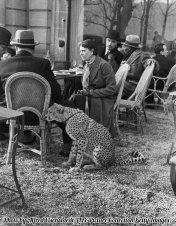 Una donna seduta col suo ghepardo domestico in Bois de Boulogne Cafe, Parigi 1932