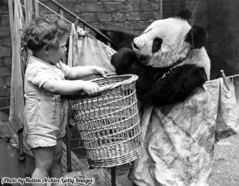 Un panda discute di problemi quotidiani con una giovane massaia, 1939