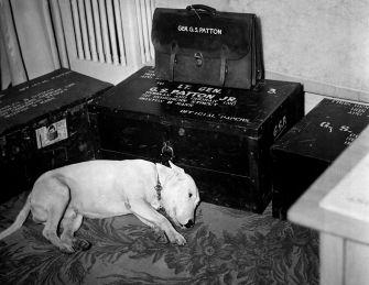 Il cane del generale Patton il giorno della morte di Patton, il 21 Dicembre 1945