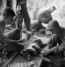 Le truppe americane curano un cane ferito nella penisola di Orote, Guam, 1944