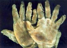 Guanti di pelle umana prodotti dal serial killer Ed Gein