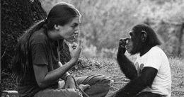 Non sottovalutare mai le capacità degli animali