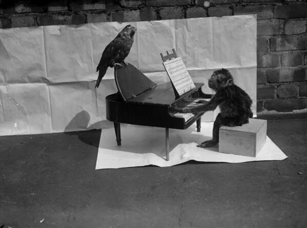 Una scimmia 'suona' un pianoforte giocattolo su cui è appollaiato un pappagallo in fase di riflessione, 1927