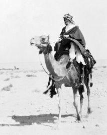 WWI - T.E. Lawrence sul suo cammello