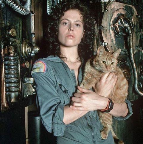 Sigourney Weaver e Jonesy. Alien, 1979