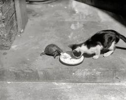 Tartaruga e gatto, 1920