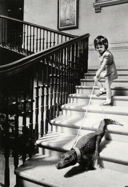 Un coccodrillo domestico è condotto in un tour della sua casa da una bambina di quattro anni. – Cricket St Thomas, Inghilterra, 1960