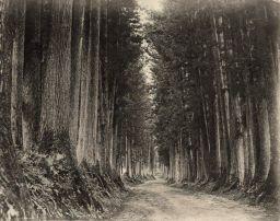 Strada forestale per Nikko