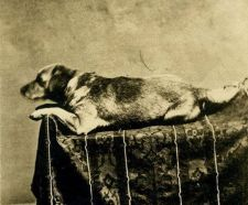 L'amato cane di Abraham Lincoln Fido, il primo cane presidenziale fotografato, 1861