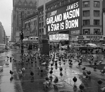 New York, 1954