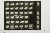 "Tibor Hajas: ""Húsfestmény / Flesh Painting Contact Sheet"", 1978"