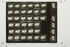 """Tibor Hajas: """"Húsfestmény / Flesh Painting Contact Sheet"""", 1978"""
