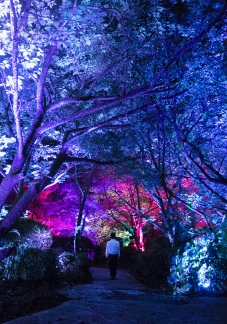 """""""A Forest Where Gods Live"""" by TeamLab"""