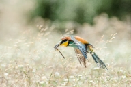 Alessandro Spiga - natura - Non solo api
