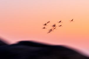 Alessandro Spiga - natura - Pink vision