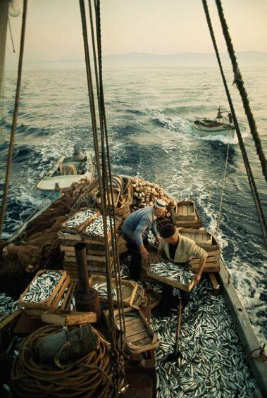 Pescatori caricano la loro pesca di sardine nelle cassette sul mare Adriatico, maggio 1970