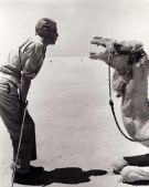 Peter O'Toole parla col suo co-protagonista sul set di Lawrence of Arabia