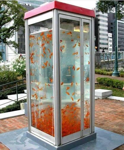 """FishTank PhoneBooth by Kingyobu collective in Japan (Il collettivo artistico giapponese noto come Kingyobu (""""club dei pesci rossi"""") ha installato Gold Tele, una cabina telefonica-acquario a Osaka, in Giappone, durante il festival artistico Canvas Project)"""