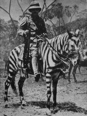 Soldato britannico su un cavallo camuffato da zebra, Africa orientale tedesca durante la prima guerra mondiale