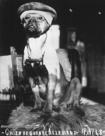 Un cane dell'esercito tedesco della prima guerra mondiale con cappello e occhiali e con in mano un binocolo, 1916