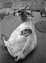 Varanasi, India, 1999. Fotografia di Pentti Sammallahti