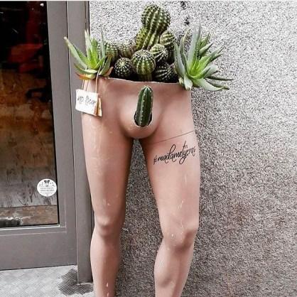 Cactus fallico