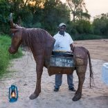 Cavallo ambulante