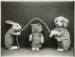 La fotografia di animali di Harry Whittier Frees (1879-1953)
