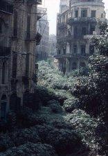 La zona di demarcazione della linea verde, Beirut, Libano 1982. Separò l'ovest musulmano dall'est cristiano. Mentre la guerra continuava, separava le popolazioni sunnite e sciite. Si chiamava Green Line perché invasa dalla vegetazione