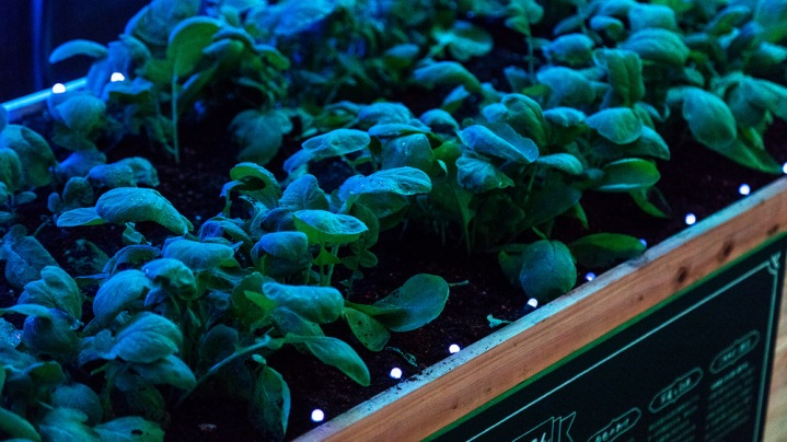 Digital Vegetables @Tokyo Midtown