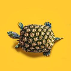 Ananas tartaruga