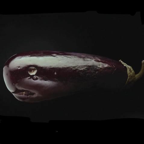 Balena melanzana
