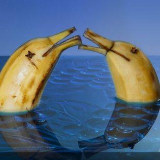 Banane delfini che si baciano