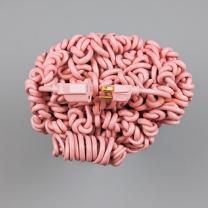 Cervello collegamento